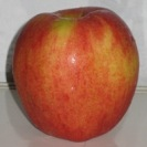 The Last Apple from the Mologne House
